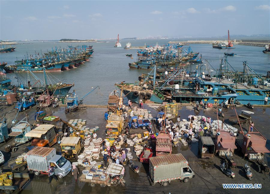 Fishermen work at Xiangzhi fishing port in Shishi, southeast China\'s Fujian Province, Oct. 2, 2018. (Xinhua/Song Weiwei)