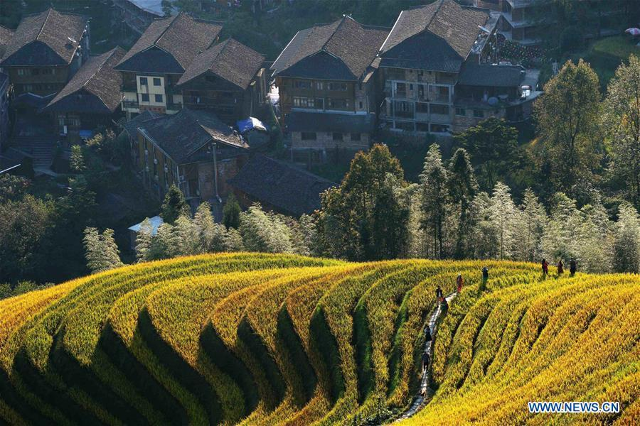 <?php echo strip_tags(addslashes(Tourists visit the terraced fields in Longji Township of Longsheng, south China's Guangxi Zhuang Autonomous Region, Oct. 3, 2018, the third day of the week-long National Day holiday. (Xinhua/Huang Yongdan))) ?>