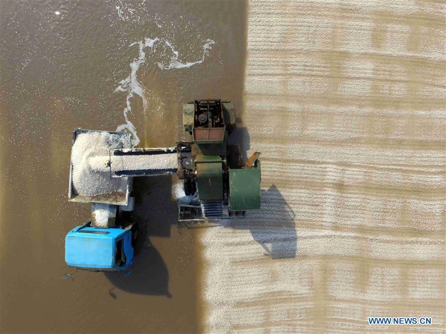 A worker manipulates a machine to harvest salt at saltworks in Binzhou City, east China\'s Shandong Province, Oct. 4, 2018. The saltworks entered the harvest season recently. (Xinhua/Guo Zhihua)