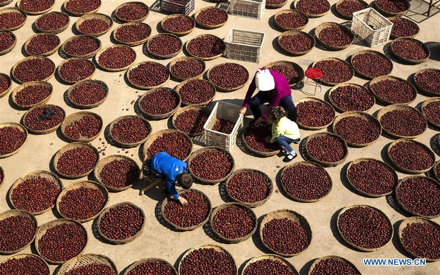 Villagers air red dates in Guantan Village of Xiangfen County in Linfen, north China\'s Shanxi Province, Oct. 3, 2018. (Xinhua/Wang Wensuo)