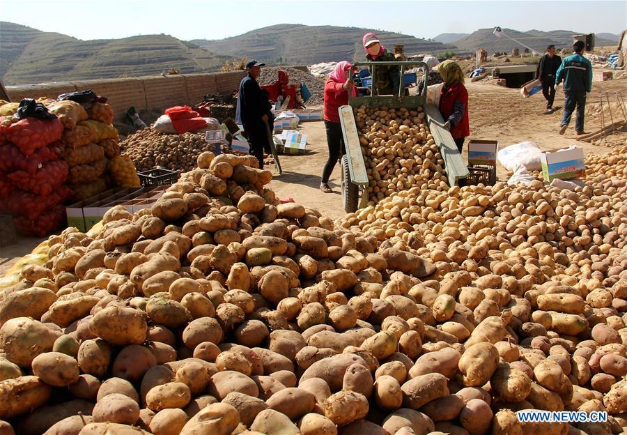 Villagers unload harvested potatoes in Dagou Town of Huining County, northwest China\'s Gansu Province, Oct. 4, 2018. (Xinhua/Chang Qibiao)