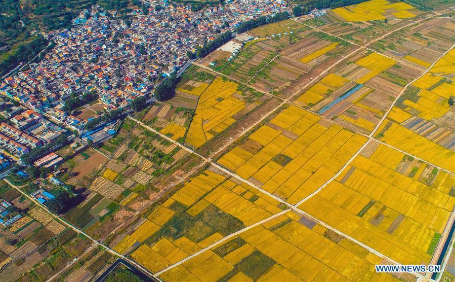 Aerial photo taken on Oct. 2, 2018 shows rice field in Shexian County of Handan, north China\'s Hebei Province. (Xinhua/Wang Xiao)