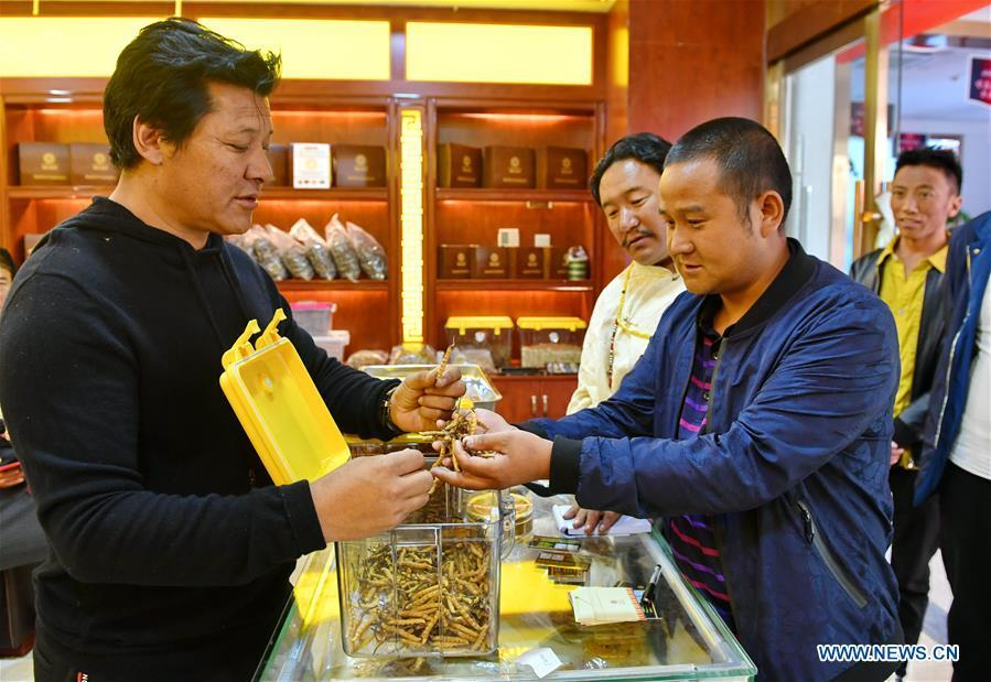 A exhibitor (L) promotes caterpillar fungi at Lhasa\'s first cordyceps sinensis trade fair in Lhasa, capital of southwest China\'s Tibet Autonomous Region, Oct. 4, 2018. (Xinhua/Zhang Rufeng)