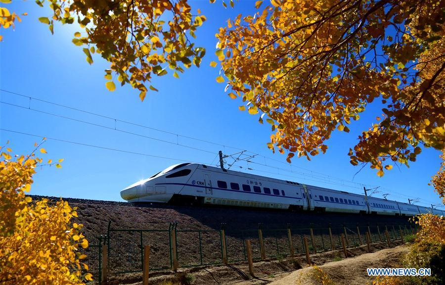 A bullet train runs past the forest of populus euphratica, commonly known as desert poplar, in the Mogao Township of Dunhuang City, northwest China\'s Gansu Province, Oct. 6, 2018. (Xinhua/Zhang Xiaoliang)