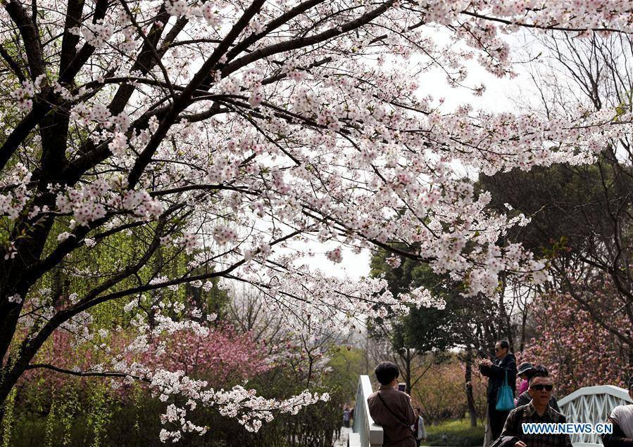Tourists look at flowers at Shanghai Botanical Garden in east China\'s Shanghai, March 27, 2018. (Xinhua/Liu Ying)