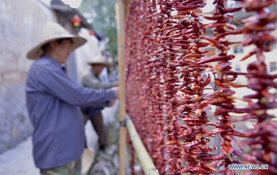 Farmers air the newly-picked hot peppers at Guifeng Village of Sanming City, southeast China\'s Fujian Province, Oct. 6, 2018. (Xinhua/Wang Wangwang)