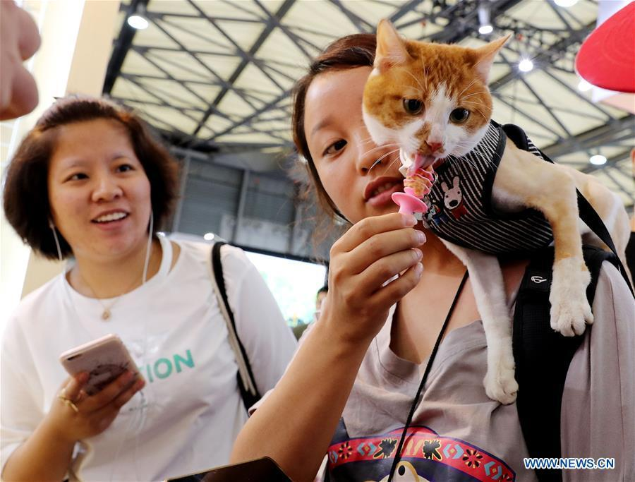A pet cat tastes cat snacks at the 21st Pet Fair Asia in Shanghai, east China, Aug. 25, 2018. The pet fair is held here from Aug. 22 to 26. Over 1,300 exhibitors bringing more than 16,000 brands of pet supplies participated in the pet fair. (Xinhua/Fang Zhe)