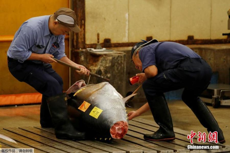 Wholesalers check the quality of frozen tuna displayed at the last tuna auctions at the Tsukiji fish market before it moves to the new Toyosu market in Tokyo, Japan, Oct. 6, 2018. Tokyo's famed Tsukiji market, the world's largest fishmarket and a major tourist attraction, held its final tuna auction on Saturday before a controversial move to a new site next week. The 83-year-old Tsukiji market drew tens of thousands of visitors a year to its warren of stalls with exotic species of fish and fresh sushi. (Photo/Agencies)