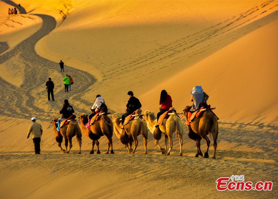 Tourists ride camels in a tour of the Mingsha Hill scenic spot in the Gobi Desert in Dunhuang City, Northwest China\'s Gansu Province, during the National Day holiday from Oct. 1 to 7. Consisting of a group of sand dunes, the Mingsha Hill, with a name that means \'singing sand\', is famous for its desert scenery and the mysterious sound made by the wind as it blows over its surface. The scenic spot attracted 307,900 tourists during the holiday, a year-on-year growth of nine percent, and achieved a tourism revenue of 330 million yuan ($47.7 million), up 10 percent on the same period last year. (Photo: China News Service/Wang Binyin)