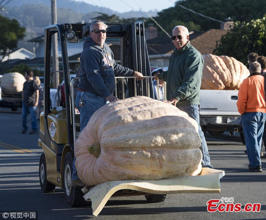 A view of the 45th Annual Safeway World Championship Pumpkin Weigh-Off in Half Moon Bay, California, Oct. 8, 2018. (Photo/Agencies)