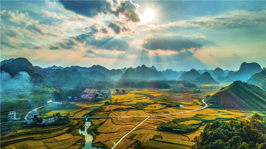<?php echo strip_tags(addslashes(Golden rice fields in Baise, Southwest China's Guangxi Zhuang autonomous region, showcase the beautiful autumn landscape, on Oct. 5, 2018. (Photo/Asianewsphoto))) ?>