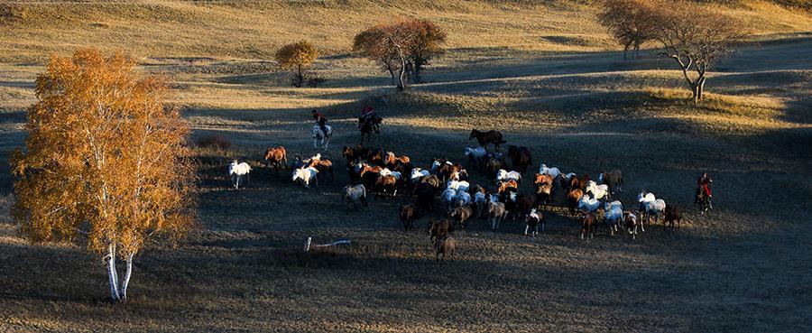 Mesmerizing autumn scenery of Wulan Butong Grassland in North China\'s Inner Mongolia. (Photo/China Daily)
