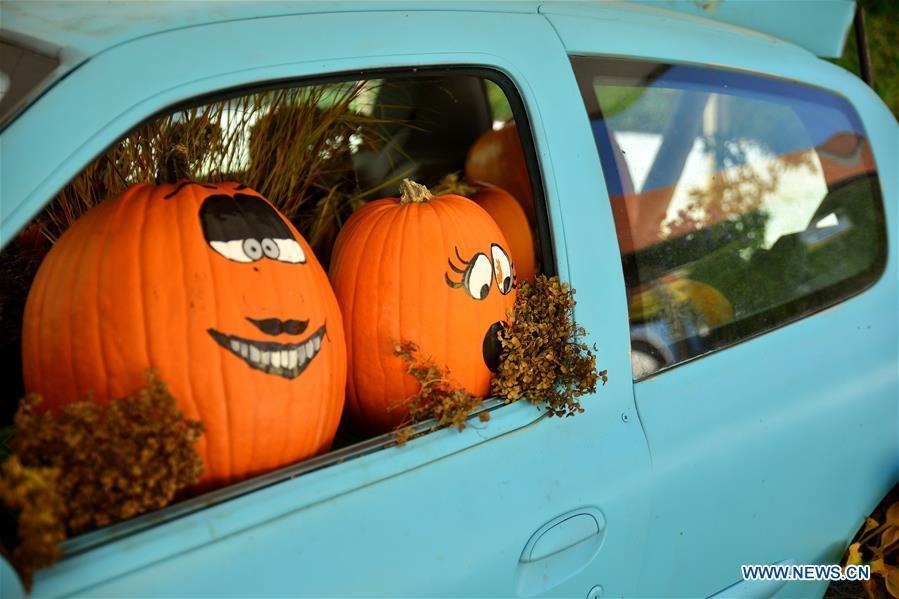 Funny Pumpkin Exhibition Held In Slovenia