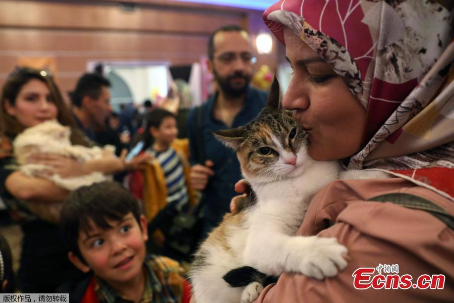 A woman carries a white cat during the 3rd International Pursaklar Cat Beauty Fest\', organized by Pursaklar Municipality in Ankara, Turkey, October 14, 2018. (Photo/Agencies)