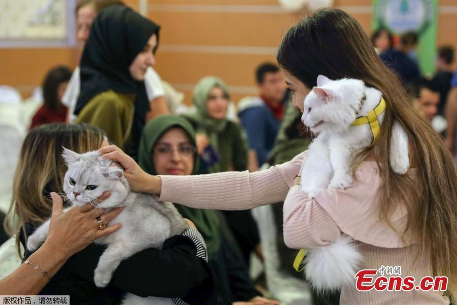 Two women speak as they carry their cats during the 3rd International Pursaklar Cat Beauty Fest\', organized by Pursaklar Municipality, in Ankara, Turkey, October 14, 2018. (Photo/Agencies)