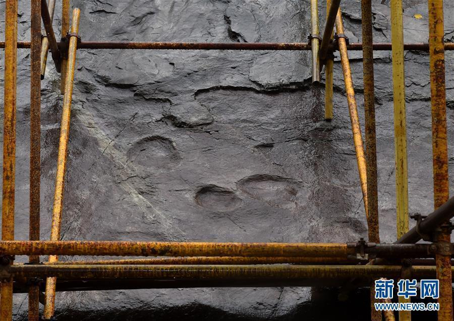 Fossilized dinosaur footprints at Yanqing Geopark in Beijing, Oct. 15, 2018. Experts from the Petrified Forest of Lesbos in Greece, China University of Geosciences (Beijing) and Yanqing Geopark are launching a new round of experimental conservation efforts for the dinosaur footprints formed about 150 million years ago and now suffering from erosion and weathering. (Photo/Xinhua)