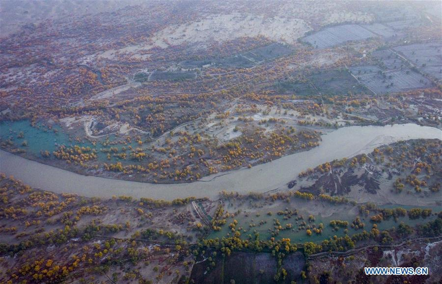Aerial photo shows the scenery of desert poplar forests in Yuli County, northwest China\'s Xinjiang Uygur Autonomous Region, Oct. 16, 2018. The Lop Nur people depended basically on fishing for livelihood and developed a distinct culture based on their special lifestyle. Located in Tarim basin, Yuli is known for its natural scenery and ethnic culture and keeps attracting numerous tourists from at home and abroad. From Oct. 1 to 16, 2018, Yuli County has received more than 230,000 visitors, with a year-on-year increase of 31.46 percent. (Xinhua/Zhao Ge)