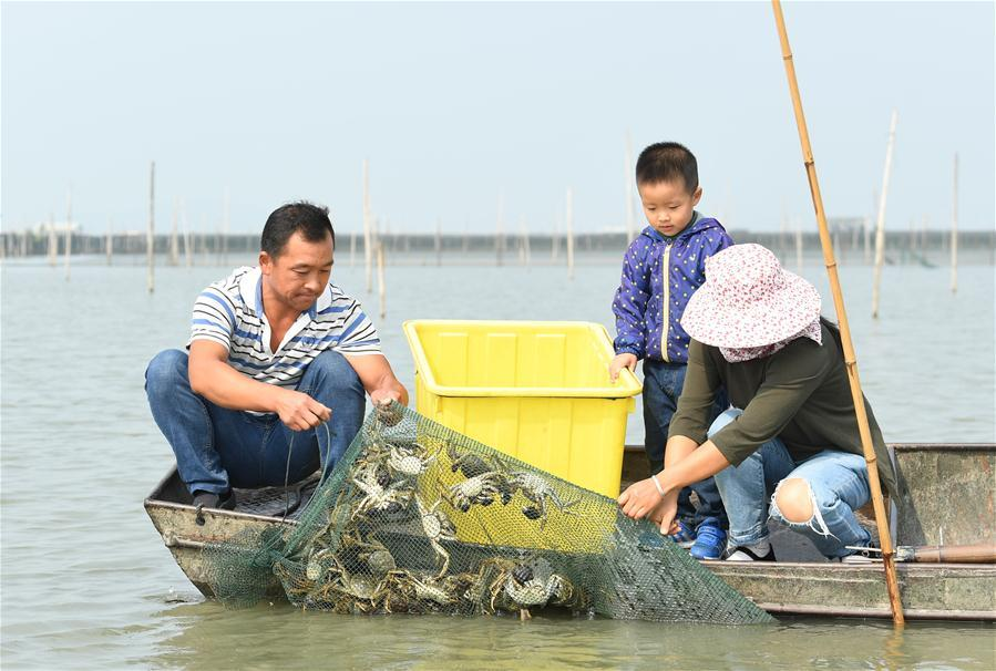 Crab breeders harvest crabs in an aquatic farm on Taihu Lake in east China\'s Zhejiang Province, Oct. 17, 2018. Local farmers were busy with their work in harvest season of the Taihu Lake crab. (Xinhua/Weng Xinyang)