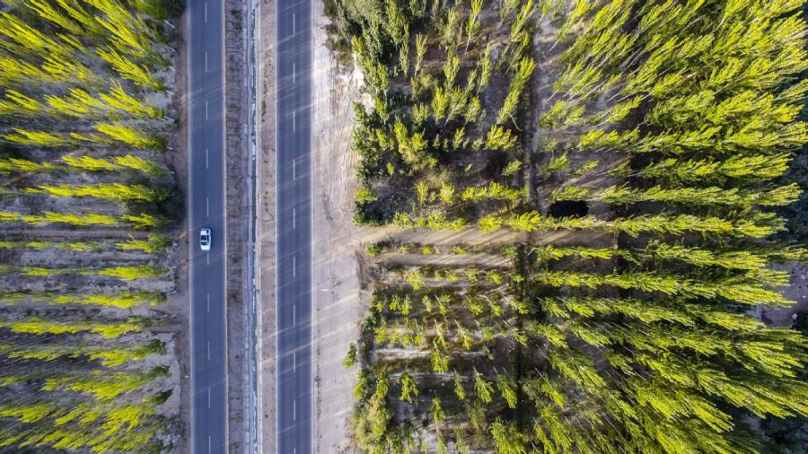 A car drives through the core region of the Kekeya green project in Aksu, Northwest China\'s Xinjiang Uyghur autonomous region, Sept. 20, 2018. (Photo/Xinhua)