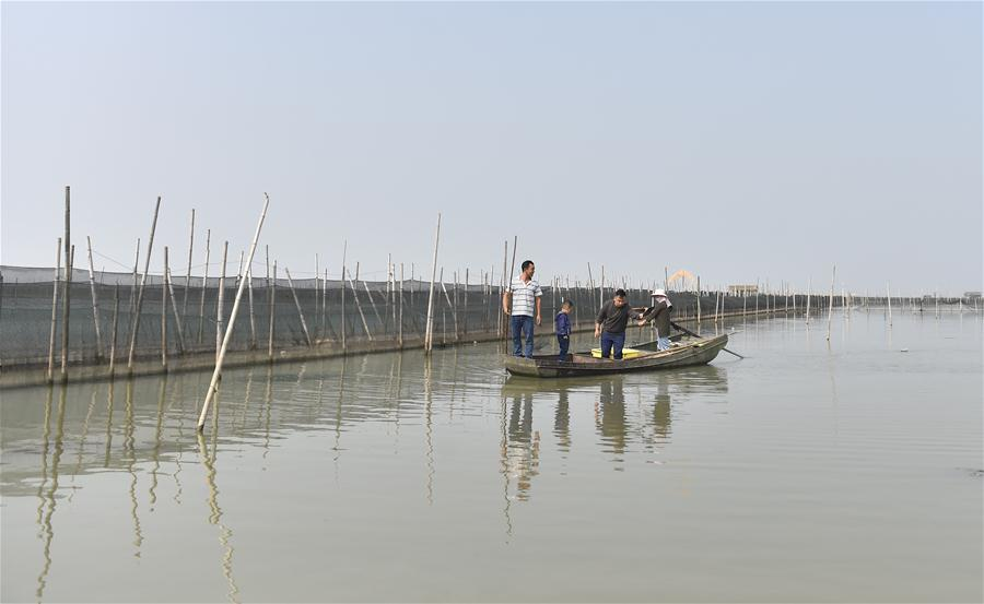 Crab breeders harvest crabs in an aquatic farm on Taihu Lake in east China\'s Zhejiang Province, Oct. 17, 2018. Local farmers were busy with their work in harvest season of the Taihu Lake crab. (Xinhua/Qian Yi)