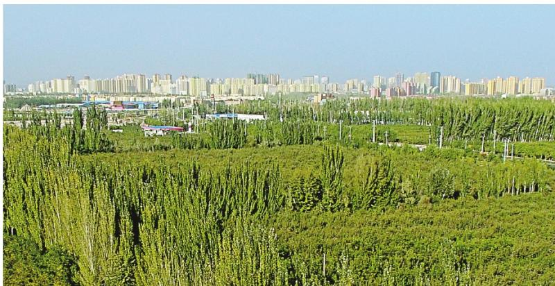 The Kekeya green project stretches towards tall buildings in Aksu, Northwest China\'s Xinjiang Uyghur autonomous region, Sept. 26, 2018. (Photo/Xinjiang Daily)