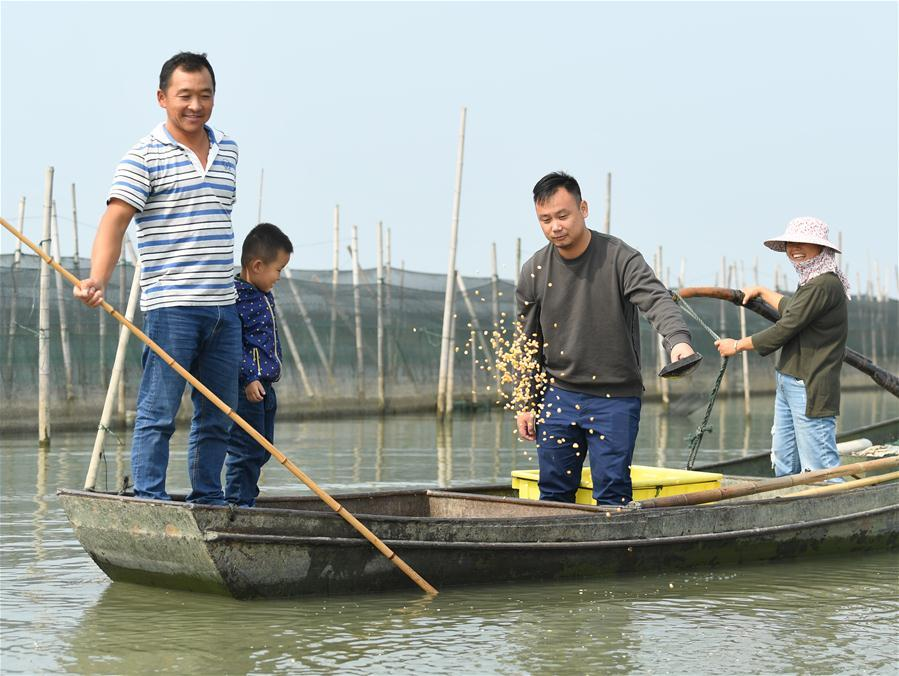 Crab breeders feed crabs in an aquatic farm on Taihu Lake in east China\'s Zhejiang Province, Oct. 17, 2018. Local farmers were busy with their work in harvest season of the Taihu Lake crab. (Xinhua/Weng Xinyang)
