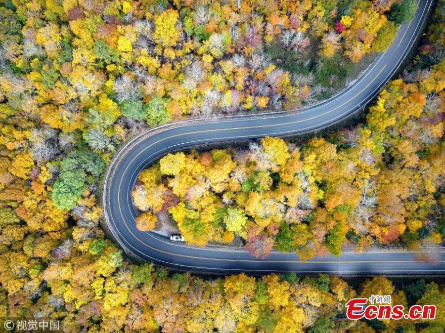 A drone photo shows the mountain road and fall foliage in Vermont, the United States. (Photo/VCG)