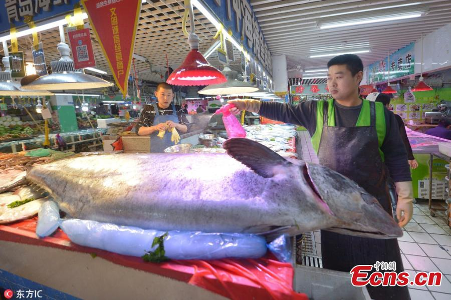 A giant Chinese seerfish is for sale at a seafood market in Qingdao City, East China's Shandong Province, Oct. 20, 2018. The fish, caught in the Yellow Sea, measured 2.5 meters in length and weighed 119 kilograms. (Photo/IC)