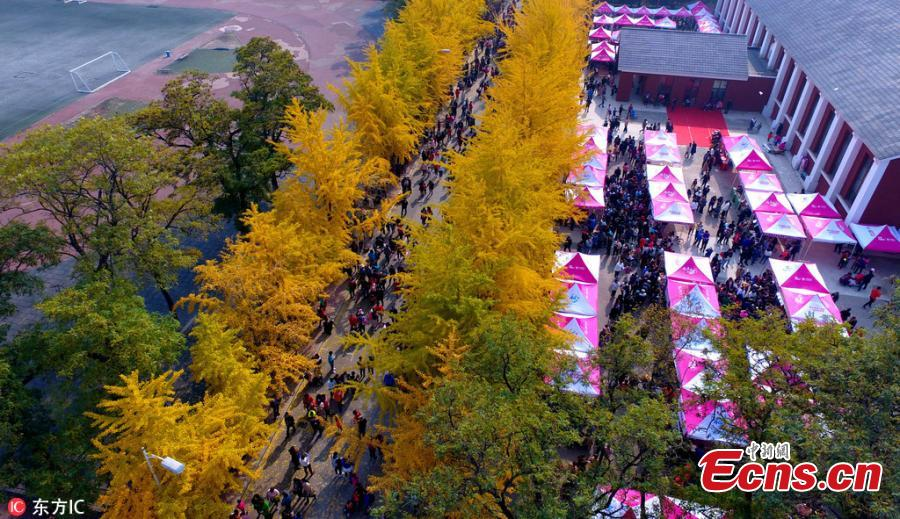 A view of the Ginkgo Festival at the Liaoning University in Shenyang City, Northeast China's Liaoning Province, Oct. 21, 2018. The annual festival has attracted many visitors to the campus. (Photo/IC)