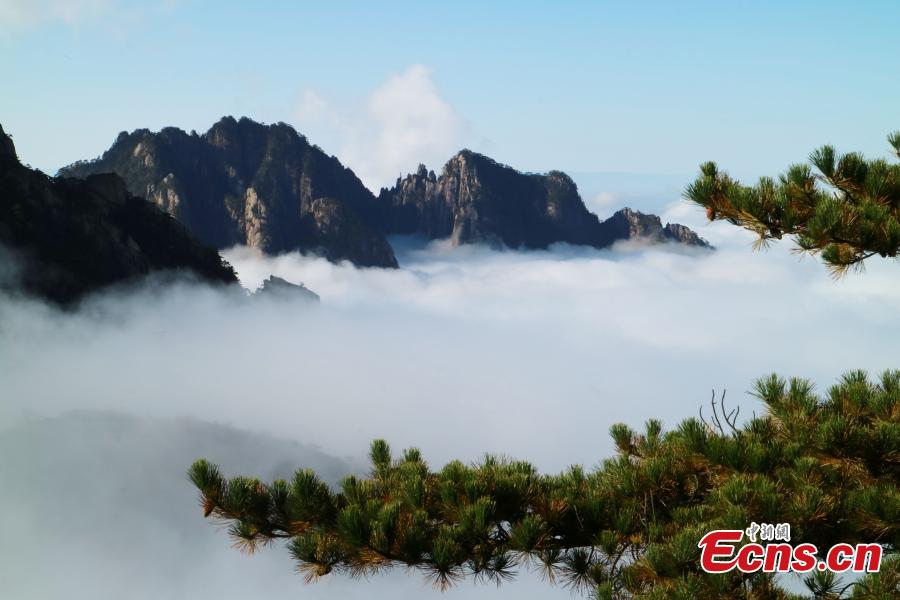 Mist and clouds surround Mount Huangshan in Anhui Province on Oct. 23, 2018. A UNESCO World Heritage site, the area is well known for its scenery, sunsets, peculiarly-shaped granite peaks, and Huangshan pine trees. (Photo: China News Service/Li Jingang)