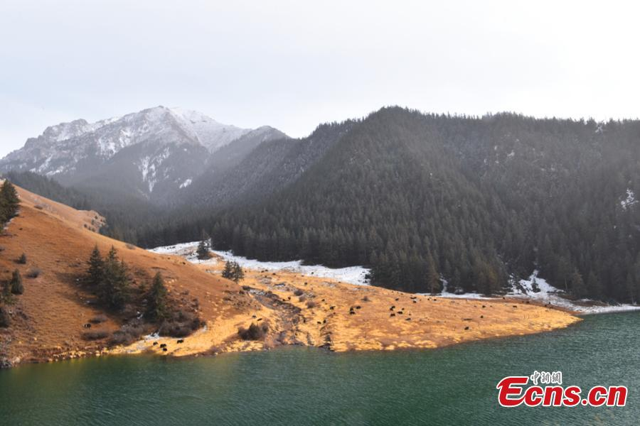 Fresh snow adds charm to trees, a river, and grassland at the foot of Qilian Mountain in Zhangye City, Northwest China's Gansu Province, Oct. 21, 2018. (Photo: China News Service/Duo Dan)