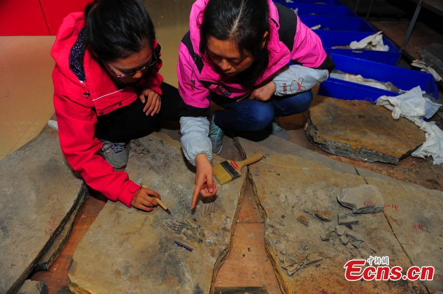 A fossil of a reptile of the Hupehsuchia species found in a geopark in Yuan'an County, Central China's Hubei Province, Oct. 24, 2018. (Photo: China News Service/Liu Kang)