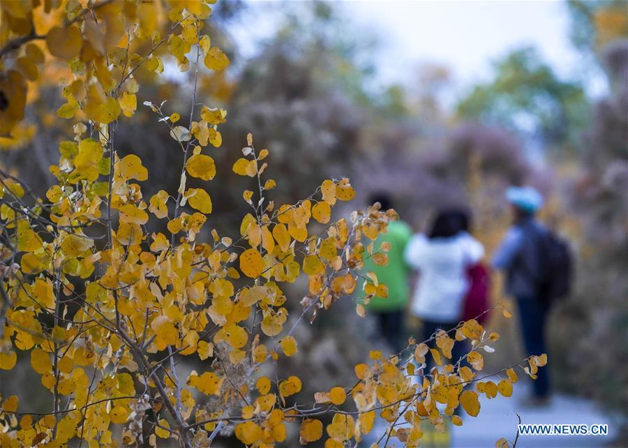 People tour among the trees of populus euphratica in Anarkol Township of Bachu County, northwest China\'s Xinjiang Uygur Autonomous Region, Oct. 26, 2018. (Xinhua/Hu Huhu)