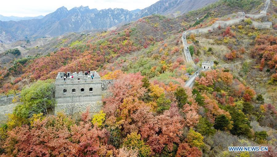 Aerial photo taken on Oct. 28, 2018 shows the autumn scenery of the Mutianyu Great Wall in Beijing, capital of China. (Xinhua/Chen Yehua)