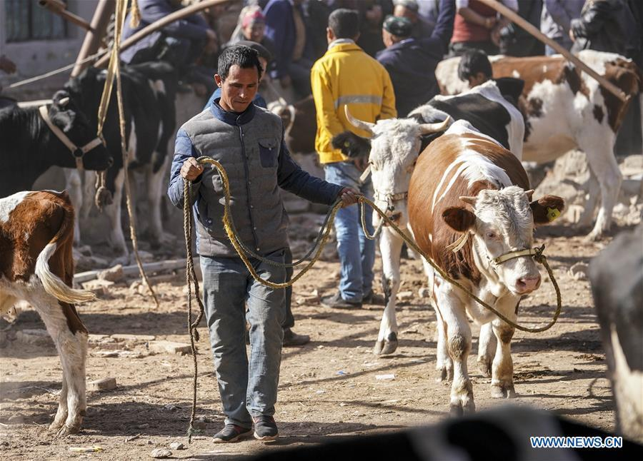 A vender pulls a cow at a Sunday bazaar in Bachu County, northwest China\'s Xinjiang Uygur Autonomous Region, Oct. 28, 2018. (Xinhua/Hu Huhu)