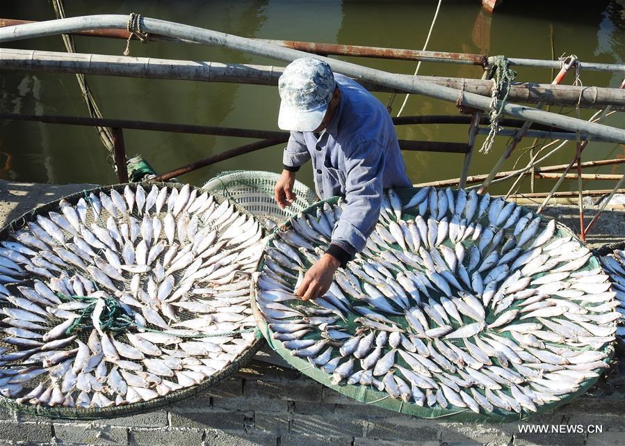 A fisherman airs fish in Lianyun District of Lianyungang City, east China\'s Jiangsu Province, Oct. 30, 2018. (Xinhua/Geng Yuhe)