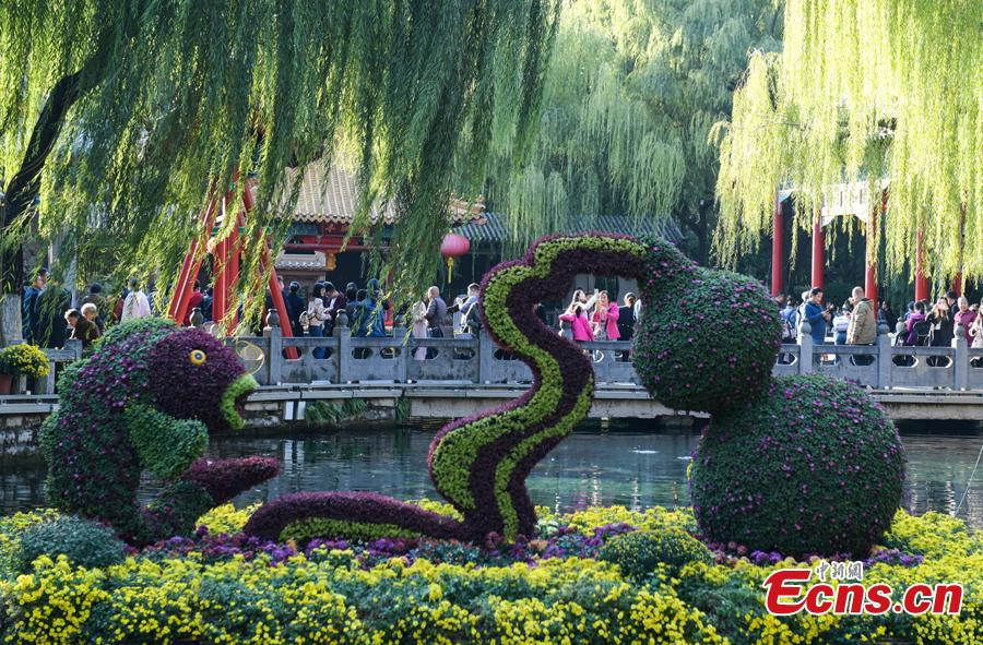 The 39th Baotu Spring Chrysanthemum Flower Festival opens in Jinan, East China's Shandong Province, Oct. 30, 2018. The fair showcases approximately 100,000 pots of chrysanthemum. The Baotu Spring is a culturally significant artesian karst spring in the city. (Photo: China News Service/Zhang Yong)
