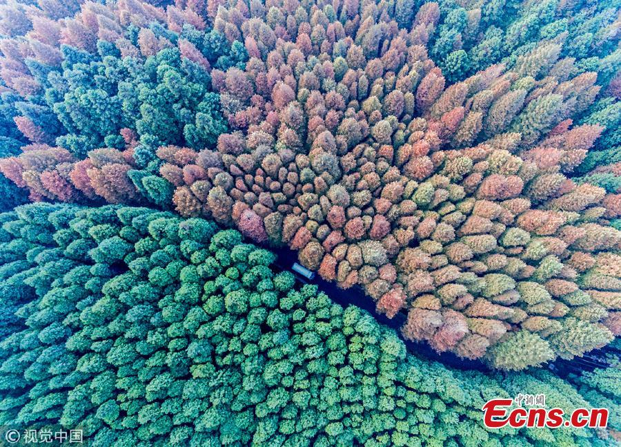 An aerial view of the forest at Shanwangping Karst Ecological Park in Nanchuan District of Southwest China's Chongqing Municipality, Oct. 30, 2018. The splendid autumn colors have attracted many tourists. (Photo/VCG)