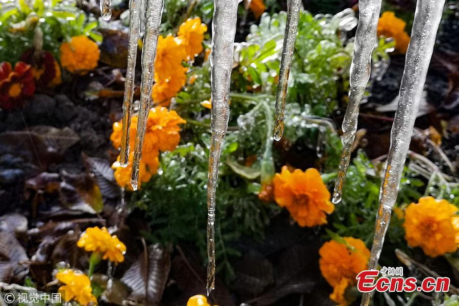 Cold front brings silver thaw to green belts in Hami city, Xinjiang Uygur Autonomous Region, Nov. 3, 2018. (Photo/VCG)