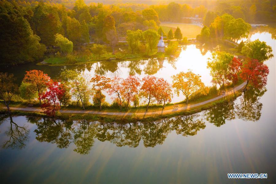 Photo taken on Nov. 1, 2018 shows the autumn scenery of the Zhongshan Botanical Garden in Nanjing, capital of east China\'s Jiangsu Province. (Xinhua/Su Yang)
