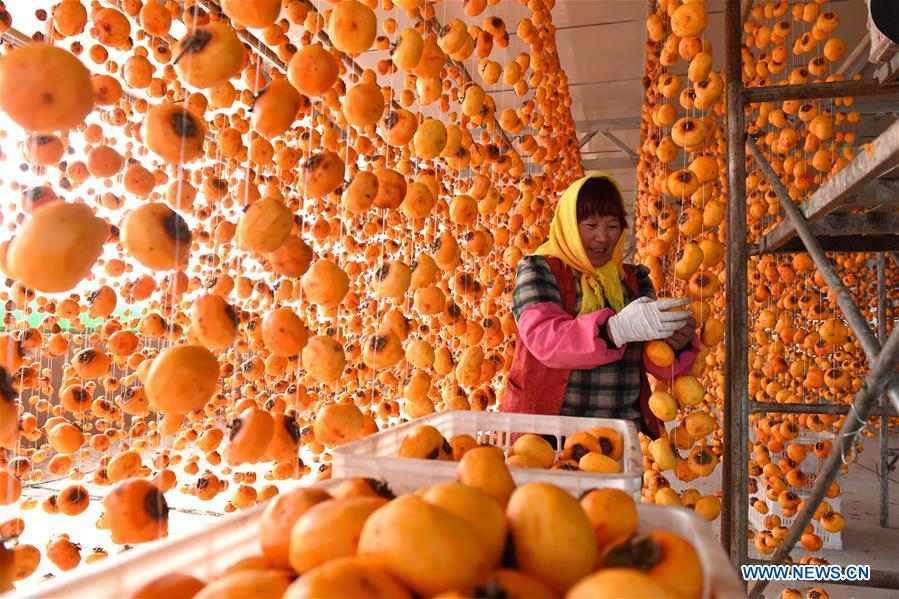 A farmer hangs persimmons for drying in Maquan Village of Yinan County, east China\'s Shandong Province, Nov. 2, 2018. (Xinhua/Du Yubao)