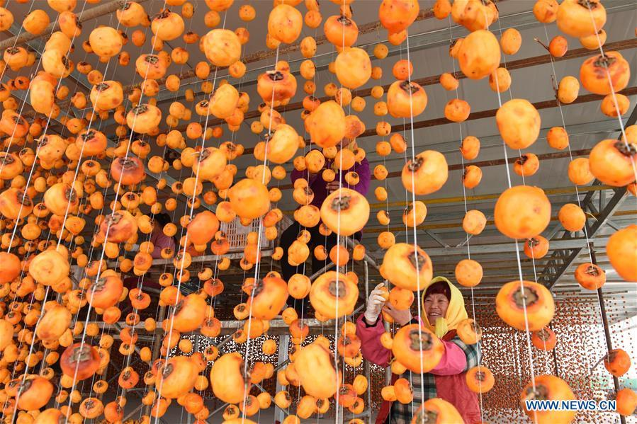 Farmers hang persimmons for drying in Maquan Village of Yinan County, east China\'s Shandong Province, Nov. 2, 2018. (Xinhua/Du Yubao)
