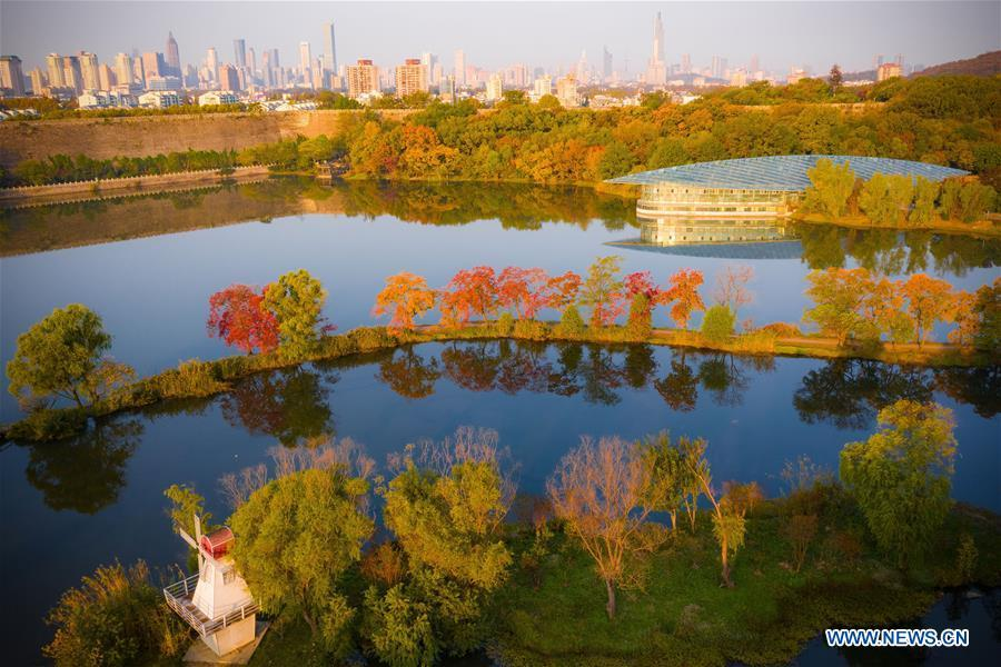 Aerial photo taken on Nov. 1, 2018 shows the autumn scenery of the Zhongshan Botanical Garden in Nanjing, capital of east China\'s Jiangsu Province. (Xinhua/Su Yang)