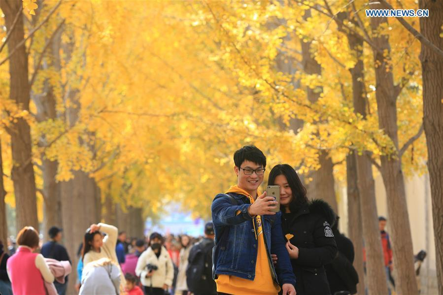 A couple pose for a selfie while visiting an avenue lined with ginkgo trees near the Diaoyutai State Guesthouse in Beijing, capital of China, Nov. 10, 2018. (Xinhua/Wang Zhongsheng)