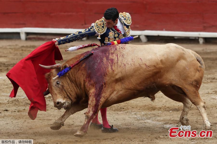 Spanish bullfighter Emilio de Justo performs a pass during a bullfight at Peru\'s historic Plaza de Acho bullring in Lima, November 11, 2018. (Photo/Agencies)