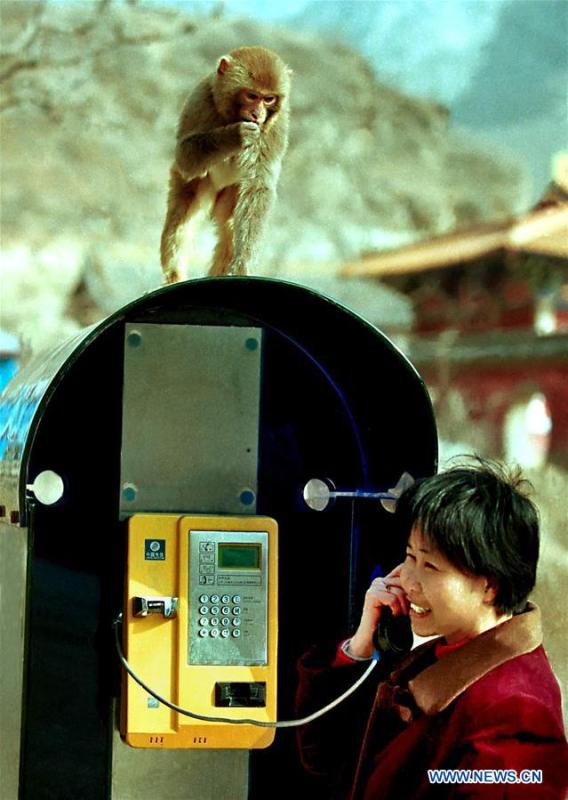 A monkey is seen on top of a booth where a tourist makes a phone call at Wulongkou scenic area in Jiyuan, central China\'s Henan Province, March 16, 2001. More than four decades of sound economic growth from 1978, the starting year of the reform and opening-up policy, has fundamentally lifted life quality of 1.3 billion Chinese, who are now able to enjoy the \