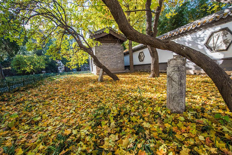 Colorful tree leaves and ancient-style buildings have made the early wintry scene in the old town area of ancient town Qingzhou, Weifang city, Shandong Province, an interesting mix. (Photo/Asianewsphoto)
