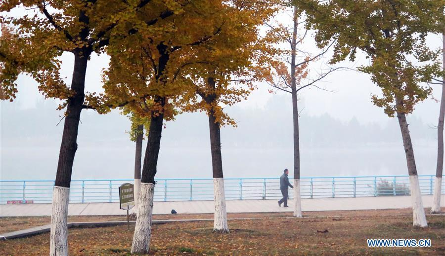A man walks in a park in thick fog in Bozhou, east China\'s Anhui Province, Nov. 13, 2018. (Xinhua/Zhang Yanlin)