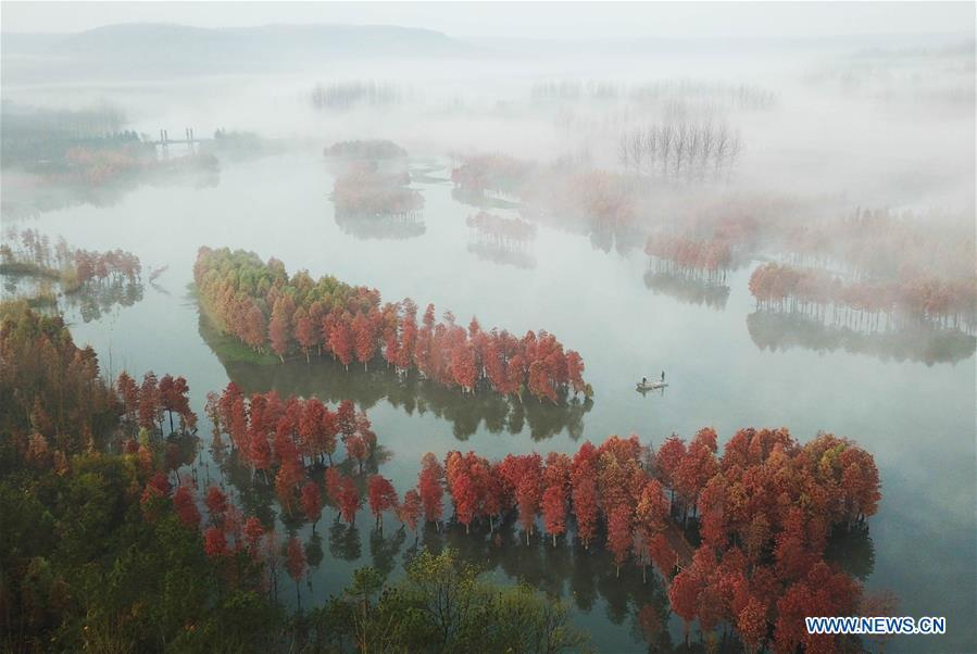 Aerial photo taken on Nov. 14, 2018 shows the scenery of redwood forest at the Tianquan Lake scenic area in Xuyi County, east China\'s Jiangsu Province. (Xinhua/Zhou Haijun)