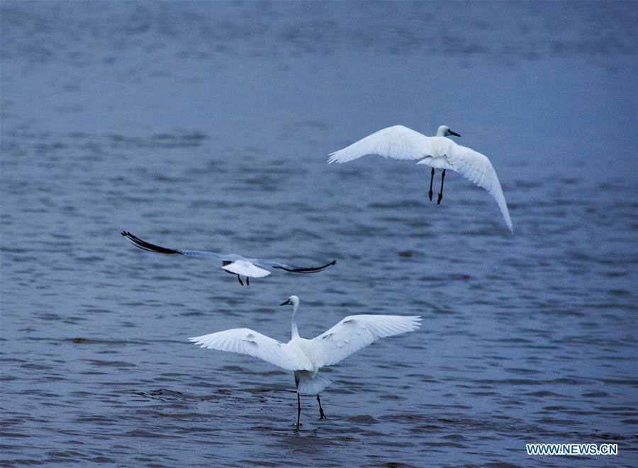 Migrant birds are seen at Duchang wetland of Poyang Lake, east China\'s Jiangxi Province, Nov. 14, 2018. The Poyang Lake, China\'s largest freshwater lake, saw a flock of migratory birds overwintering in it. (Xinhua/Fu Jianbin)